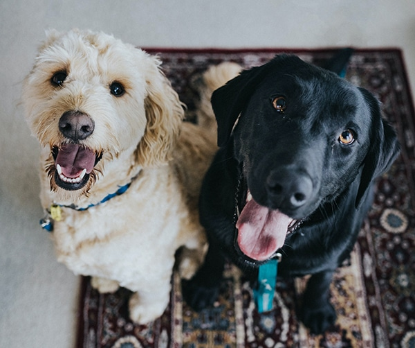moving with pets in tricities wa